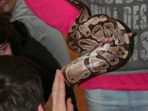 Pokaz węży